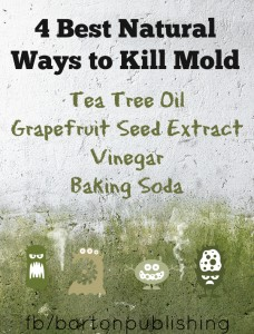 4 Best Natural Ways to Kill Mold